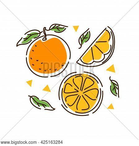 Juicy Orange Set. Citrus Fruit, Orange Slices, Tangerine In The Outline Style. Vector Illustration.