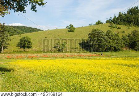 Rural Field Of Lentils In The Regional Park Of Colfiorito, Umbria