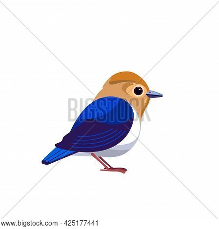 Sapphire Flycatcher Is A Species Of Bird In The Family Muscicapidae. Ficedula Sapphira. Blue Flycatc
