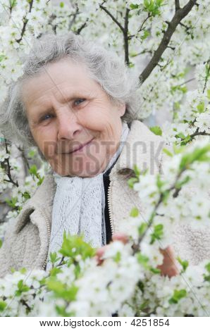 Granny On Background Of White Flowers