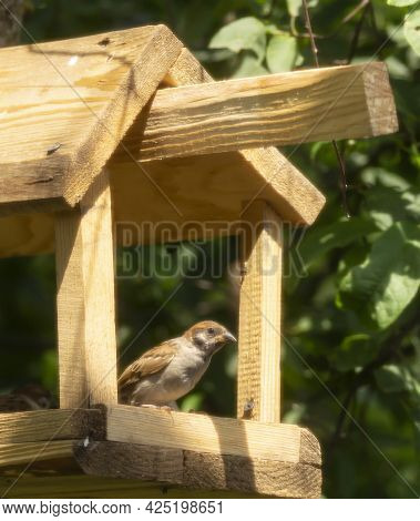 A Sparrow In A Feeder On A Tree In The Park. Wild Birds In The Open Air