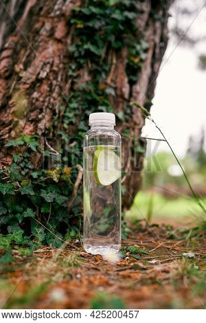 Bottle Of Water Stands Near The Trunk Of A Fir-tree Entwined With Ivy