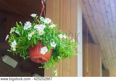 White Petunia Flowers In Wooden Planters On The Summer Veranda.