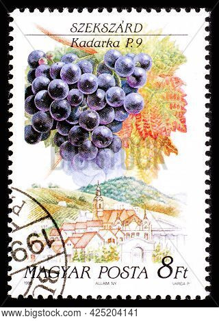 Hungary - Circa 1990: A Postage Stamp From Hungary Showing Sort Of Grape Kadarka In Szekszard Region