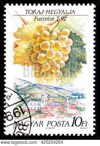 Hungary - Circa 1990: A Postage Stamp From Hungary Showing Sort Of Grape Furmint In Tokaj-hegyalja R