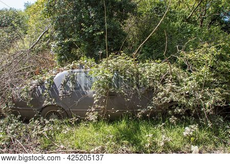 Old Abandoned Car Covered In Undergrowth. Vehicle Reclaimed By Nature. Vintage Motor Car Hidden In F