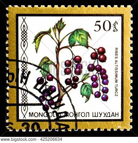 Mongolia - Circa 1986: A Postage Stamp From Mongolia Showing Berries Ribes Altissimum Turcz