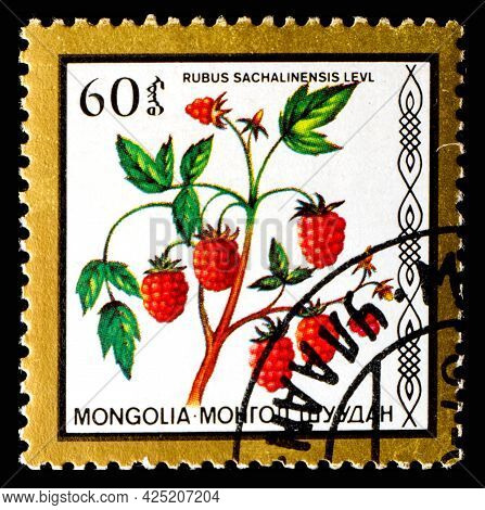 Mongolia - Circa 1986: A Postage Stamp From Mongolia Showing Berries Rubus Sachalinensis Levl