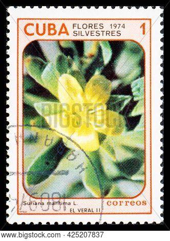 Cuba - Circa 1974: A Postage Stamp From Cuba Showing Garden Flowers Suriana Maritima