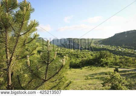 Young Shoots Of The Austrian Pine (pinus ) Against The Background Of The Karalez Valley, Bakhchisara