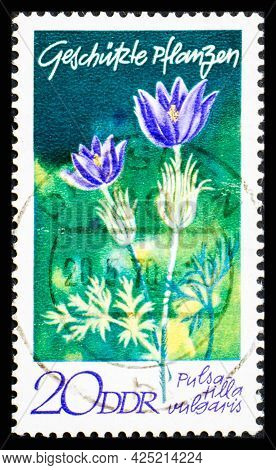 Germany, Ddr - Circa 1970: A Postage Stamp From Ddr Showing Flowers Pulsatilla Vulgaris