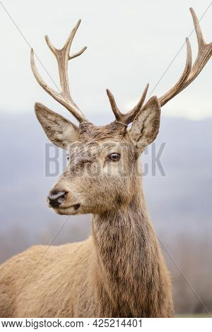 Wild Deer Captured Forest. High Quality Beautiful Photo Concept