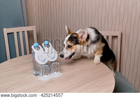 Advertising Of Motel For Recreation With Pets. Corgi Dog Stands With Its Hind Legs On Chair And Put