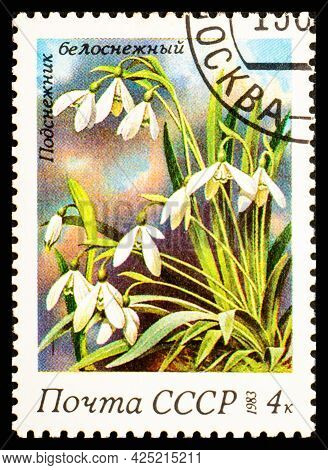 Russia, Ussr - Circa 1983: A Postage Stamp From Ussr Showing Flowers Galanthus Nivalis