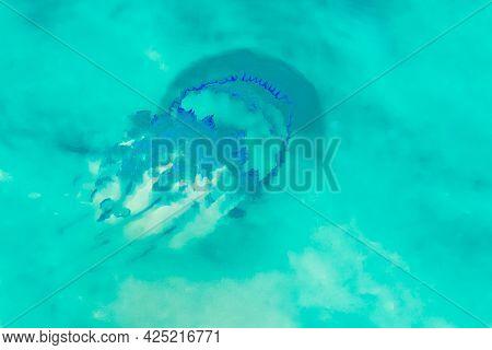 Medusa Swims In Light Clear Aquamarine Sea Water Near Shore, Close-up.