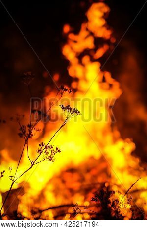 Forest Fire Concept. Wildfire. Night Fire In The Forest. Defocused