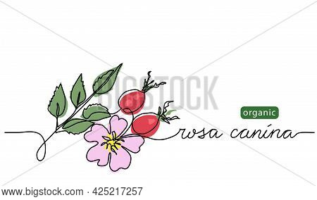 Wild Rose, Briar Background. Dog Rose Branch Vector Illustration. Rosa Canina Drawing. One Continuou