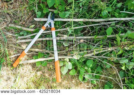A Large Silver Garden Pruner With Orange Handles Lies On The Ground. Cut Branches Of Trees Lie Nearb