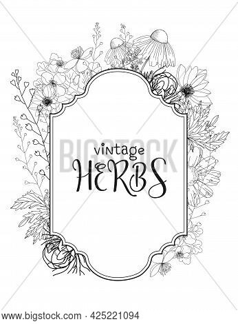 Template Card With Medicinal Herbs. Vector Template. Wild Medicinal Plants. Retro Flowers. Hand Draw