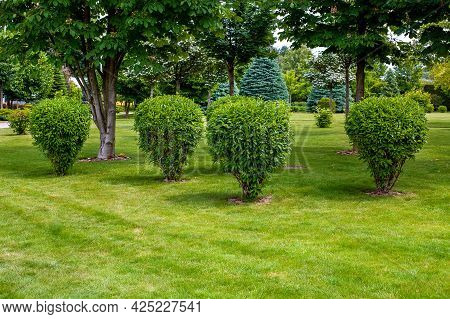 Green Deciduous Bush In Backyard Garden Bed, Landscaped Park With Mulching Plants And Meadow Lawn Wi