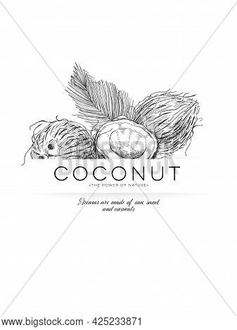 Coconut Poster, Retro Hand Drawn Vector Illustration. Template For Packaging Label Design Coco Produ