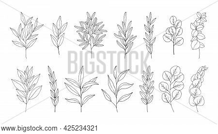 Leaves Set, Line Art Hand Drawn Branches. Twigs Of Eucalyptus, Rosemary, Olive. Botanical Elements F