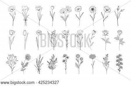 Floral Set, Line Style Hand Drawn Flowers. Poppy, Rose, Lily Of The Valley, Lavender, Chamomile And