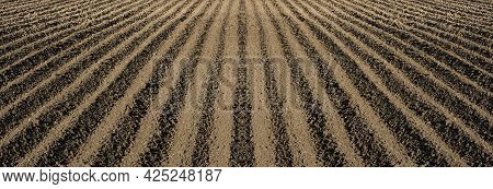Deep Furrows In The Ground After Plowing, Panoramic View