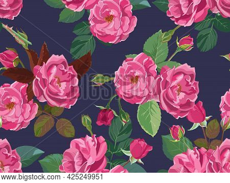 Summer And Spring Foliage And Blooming Pink Roses