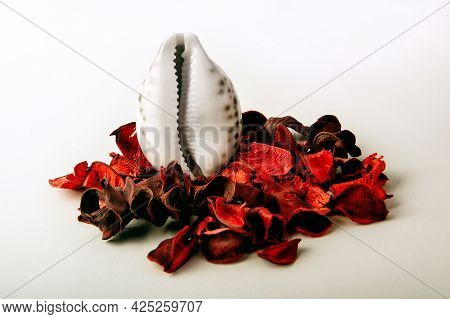 Red Rose Petals Near The Shell In The Form Of A Vagina On A White Background. The Concept Of Women's