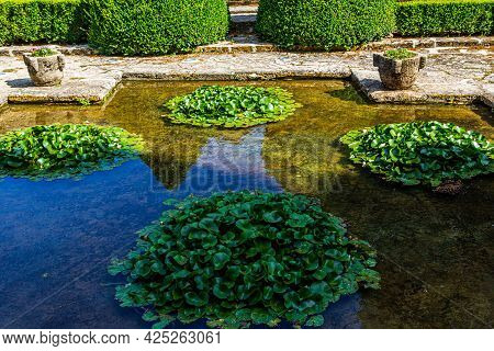 Pond In The Garden. Plants In The Pond. Pond With Plants In The Park.