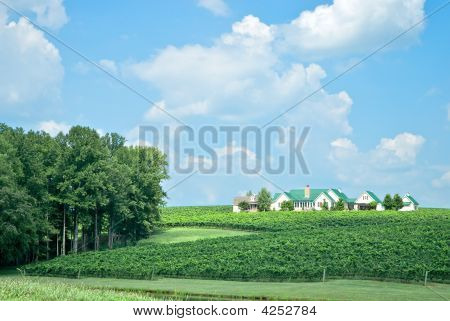 Mansion On Vineyard