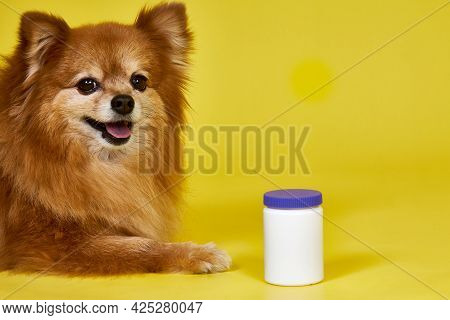A German Spitz Dog Lies On A Yellow Background, Next To The Dog Is A White Jar. Vitamins For Pets