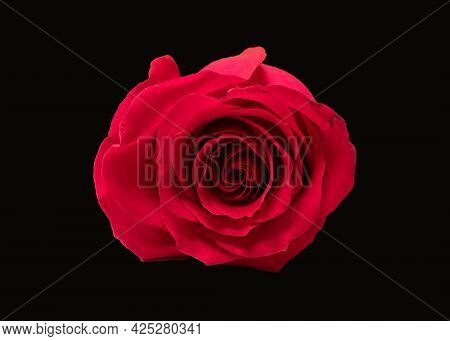 Red Rose Flower View From Above, Macro Photo Of Middle Of Flower Head