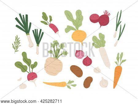 Fresh Organic Root Vegetables. Set Of Healthy Farm Food. Carrot, Onion, Radish, Daikon, Garlic, Beet