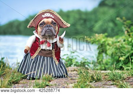 Funny French Bulldog Dog  Dressed Up With Pirate Bride Costume With Hat, Hook Arm And Dress Standing