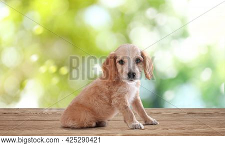 Cute English Cocker Spaniel Puppy On Wooden Surface Outdoors, Bokeh Effect. Adorable Pets