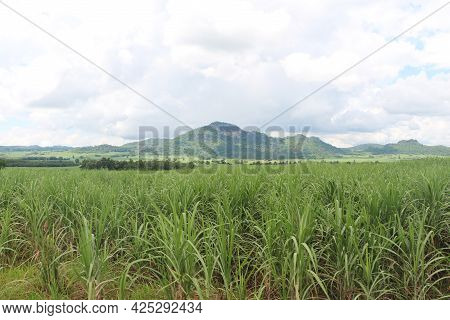 Sugarcane Fields With Mountains And Blue Sky As A Backdrop.