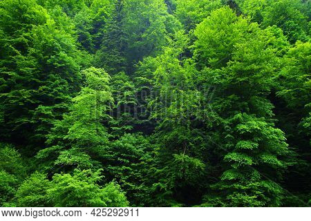 Abstract background image of a summer forest green foliage