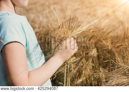 Close-up Of A Girls Hand With A Bouquet Of Spikelets And A Field. Harvesting, Summer Vacation In Nat