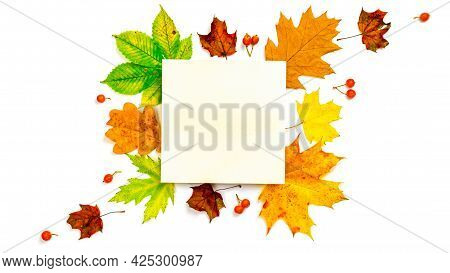 Autumn Leaves Fall. Dried Green Leaves, Yellow Leafs And Red Berries In Shape Frame Isolated On Whit