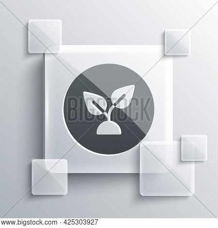 Grey Plant Based Icon Isolated On Grey Background. Square Glass Panels. Vector