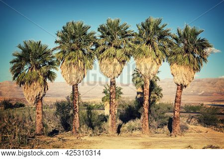 A Row Of Palm Trees In The Desert, Lake Mead National Recreation Area, Usa. Retro Style Processing W