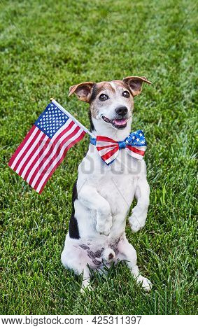 Dog Posing In American Flag Bow Tie With Usa Flag On Green Grasslooking At Camera. Celebration Of In