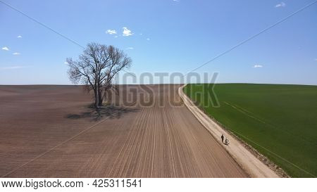 Early Spring Agricultural Field With Lone Standing Tree During Sunny Day