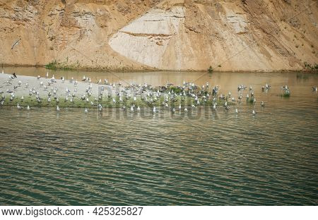A Large Flock Of Seagulls On An Island In The Middle Of The Lake.
