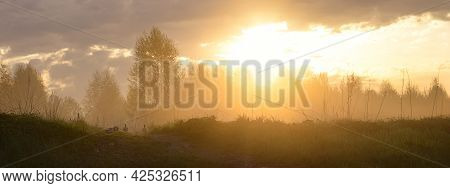 Dawn In The Forest. Panorama. Ducks Walk On Green Grass. Fog. The Lights Of A Sun.