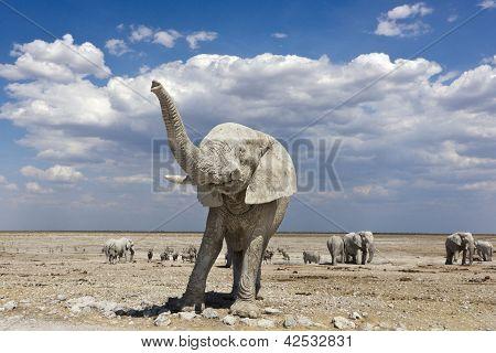 Elephant Namibia Trunk