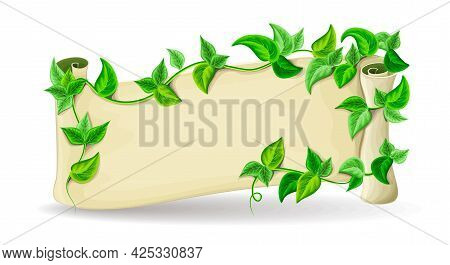 Banner With Green Leaves Of Tropical Liana. Paper Scroll With Space For Text Cartoon Illustration. P