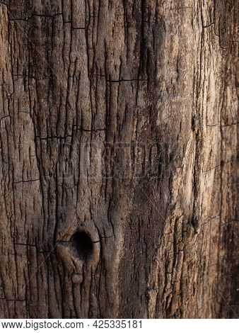 The Bark Of The Tree Is Dark Brown With A Hollow.